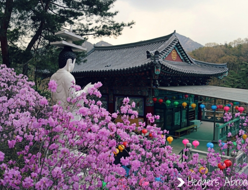 Finding Spring Blooms in Seoul