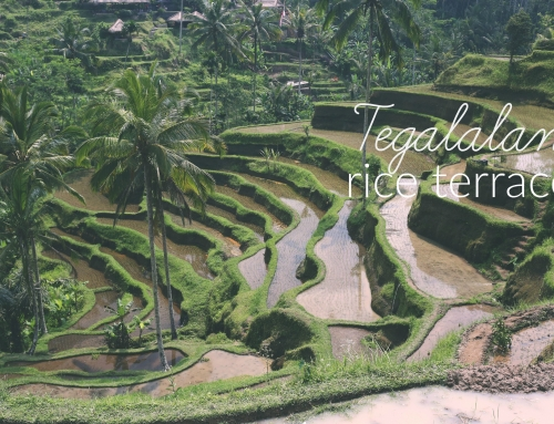 In Focus: Tegalalang Rice Terraces