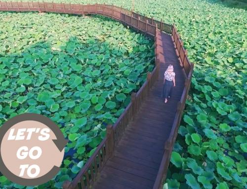 Let's go to… Jeonju's Deokjin Park!